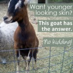 Keeping Skin Youthful with Goat's Milk