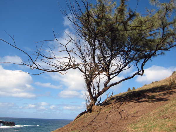Hawaii cliffs and tree