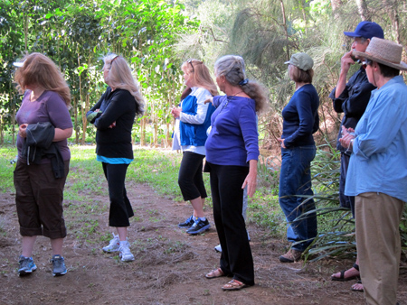 guided group tour hawaii