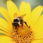 Honey Bees Are Suffering and Why You Should Give a Damn