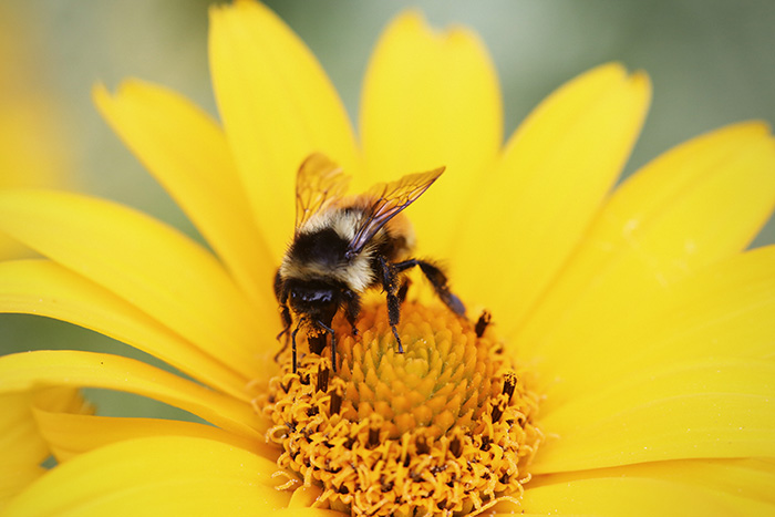 honey-cruel-to-bees
